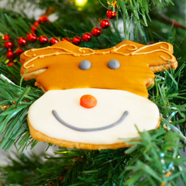 A Rudolph cookie in a tree